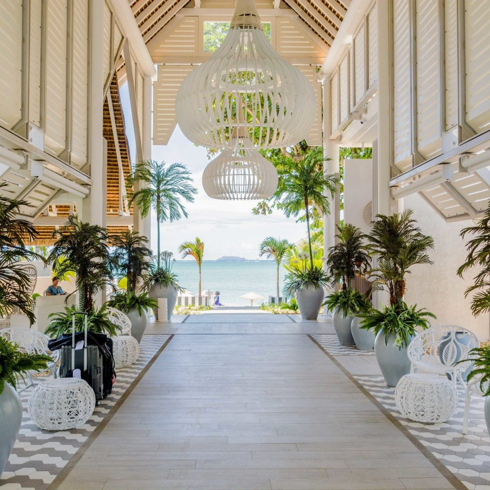 plant building flower arecales floristry palm tree aisle white tree ceremony floral design flower arranging palm Lobby porch colonnade