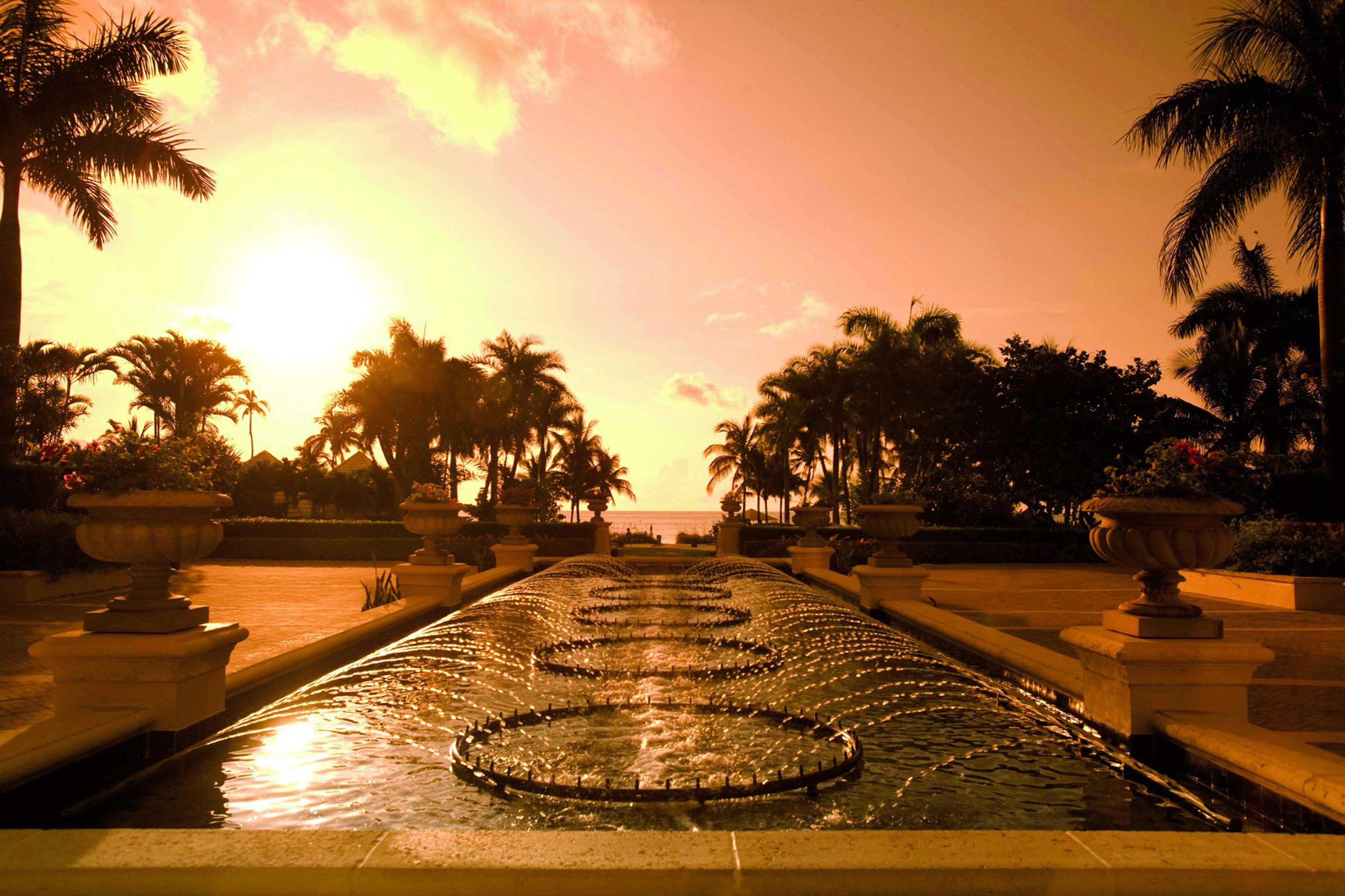 Lounge Luxury Modern Pool tree Sun water Sunset night evening morning dusk arecales sunlight lighting sunrise dawn setting
