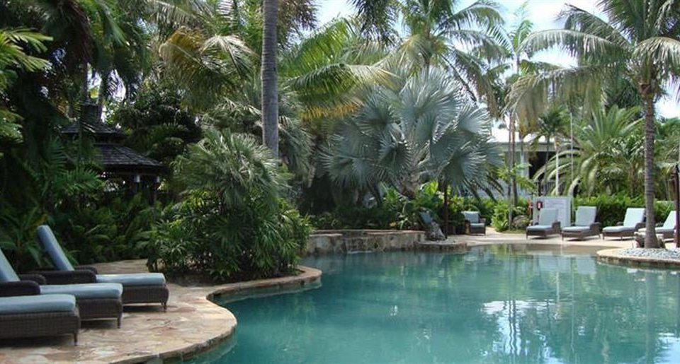 Lounge Luxury Pool tree swimming pool Resort property palm plant arecales condominium Villa eco hotel backyard