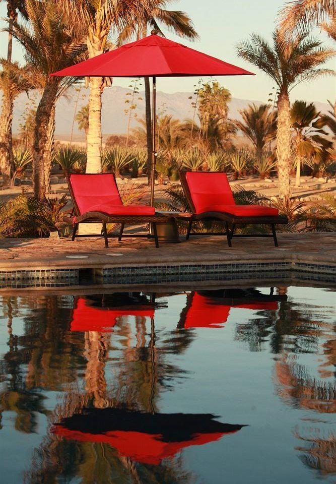 Lounge Pool Tropical tree water umbrella red season evening Nature Sunset autumn lined colored