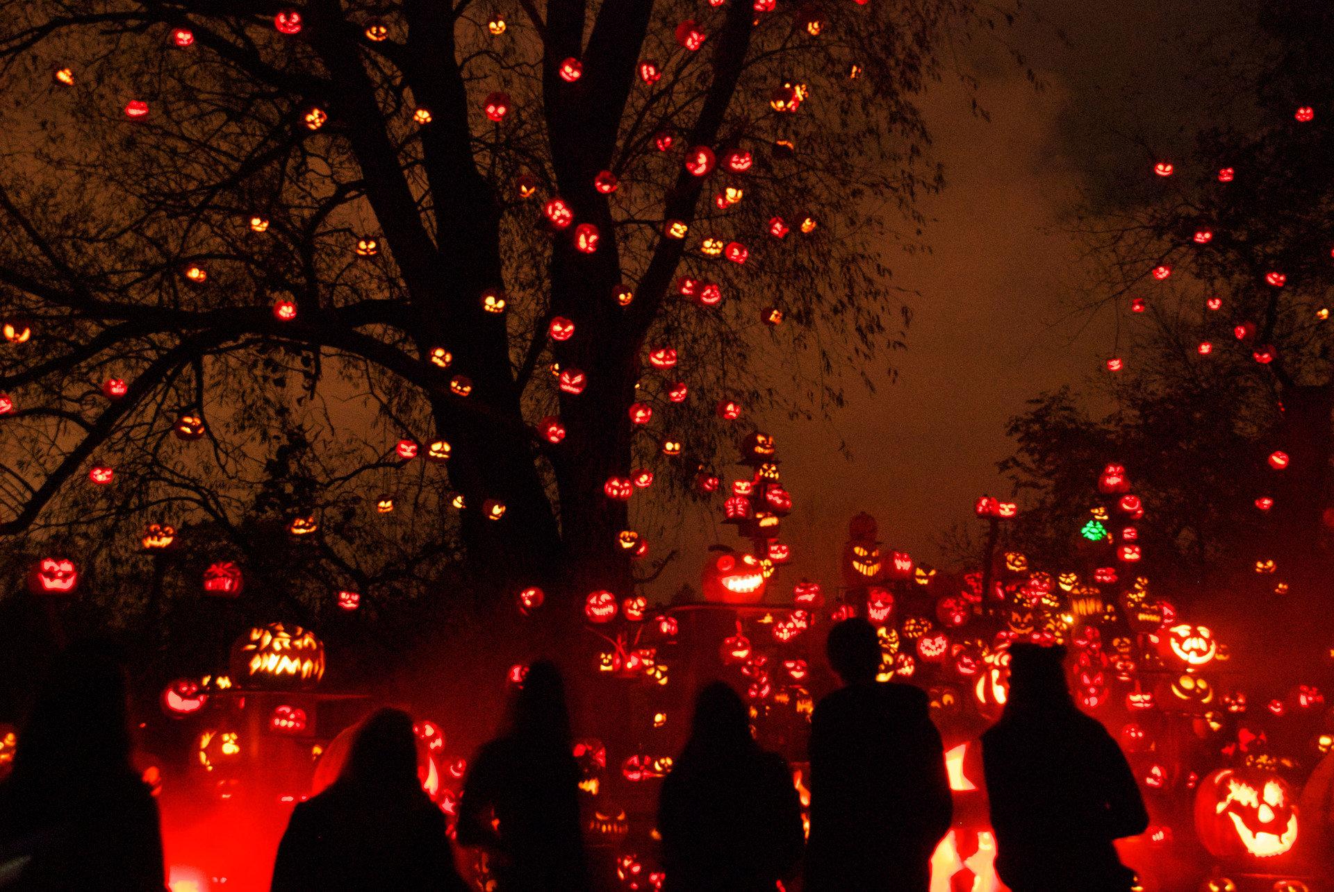 duplicate festive glow halloween holiday lights night night lights orange Outdoors pumpkins silhouette trees Trip Ideas outdoor christmas lights Christmas light christmas decoration darkness event bunch