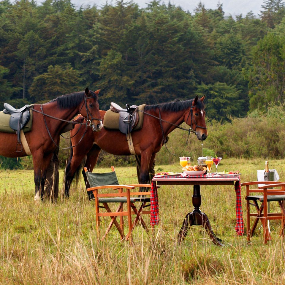 Luxury Romantic Safari tree grass horse endurance riding trail riding pasture mare equestrianism brown eventing grazing pack animal animal sports horse like mammal meadow rural area Ranch english riding equestrian sport