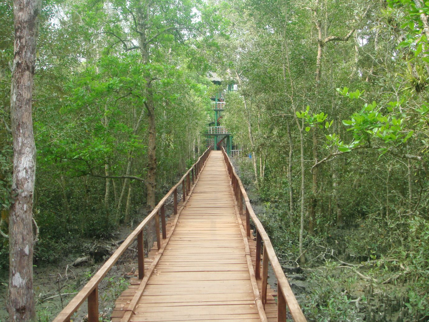 Trip Ideas tree outdoor habitat bridge natural environment rope bridge Forest canopy walkway wood track rolling stock woodland suspension bridge trail rainforest Jungle wooded plant nonbuilding structure lush