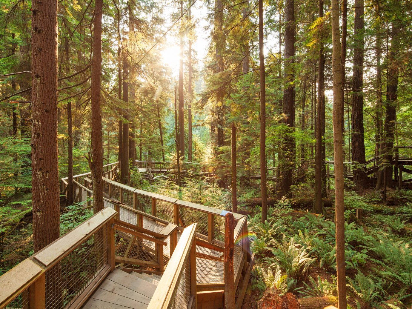 Trip Ideas tree outdoor habitat woodland natural environment Forest wilderness wood wooden ecosystem park old growth forest temperate broadleaf and mixed forest rainforest biome temperate coniferous forest wooded Jungle sunlight trail area autumn deciduous plant surrounded