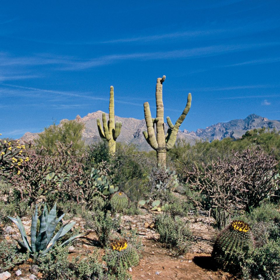 Mountains Natural wonders Nature Outdoor Activities Outdoors Scenic views plant cactus sky flora tree flower botany land plant arecales flowering plant landscape agriculture wildflower