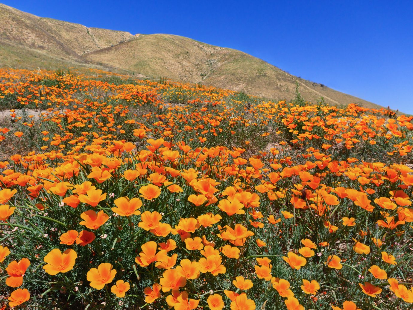 Trip Ideas sky flower mountain plant outdoor flora ecosystem poppy land plant field flowering plant leaf wildflower autumn meadow prairie annual plant colorful