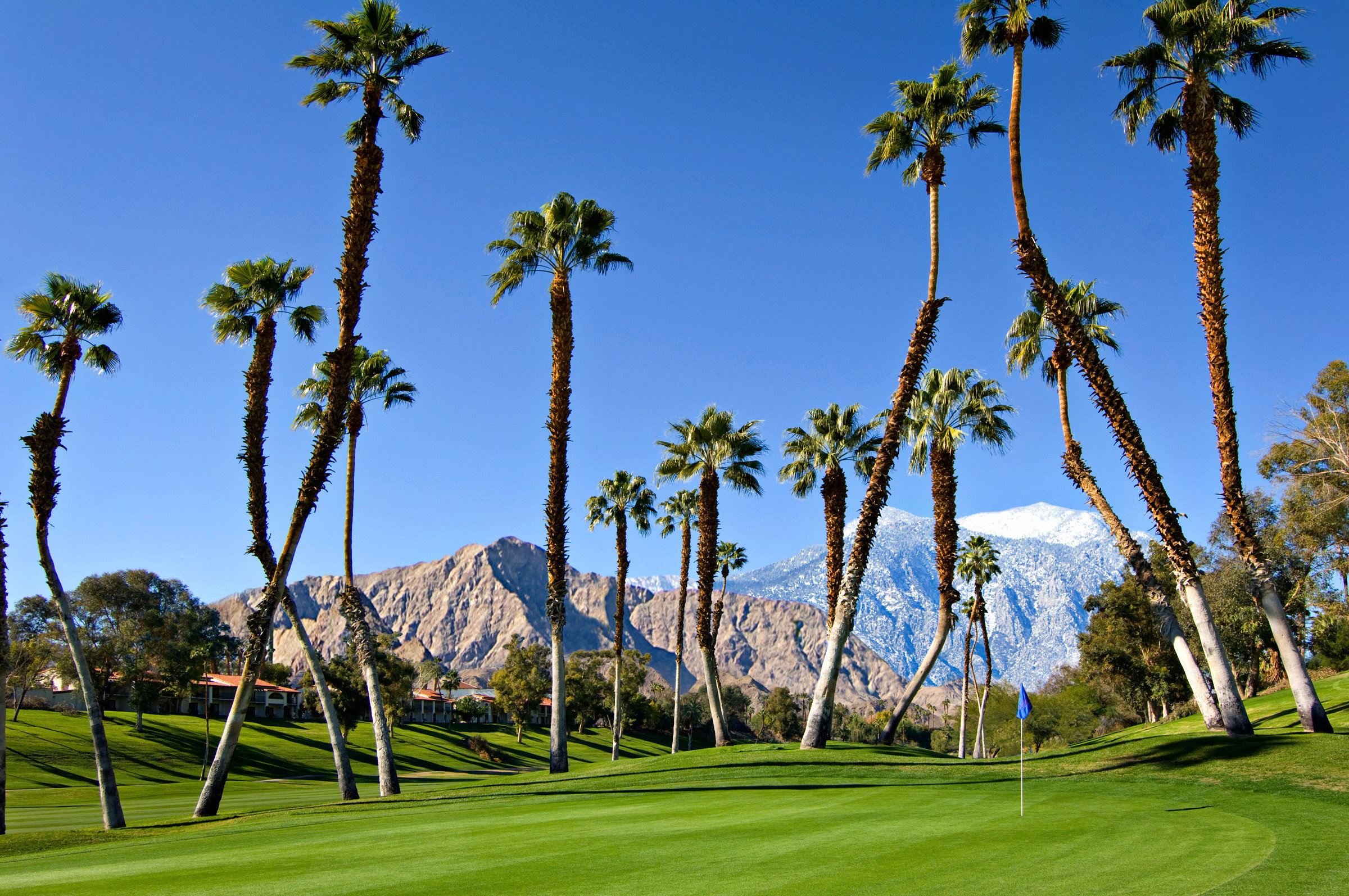 tree grass sky palm structure Nature plant green botany sport venue arecales woody plant golf course field palm family lawn meadow recreation park lush