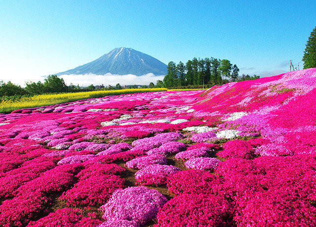 sky flower mountain plant field flora grassland land plant flowering plant Nature daisy family meadow wildflower plateau colorful day
