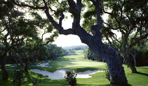 tree plant grass Nature oak park golf club plantation landscape golf course sky lawn shade