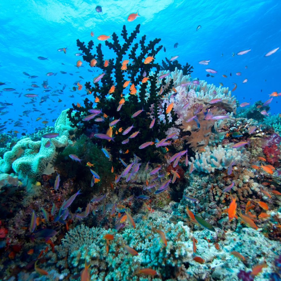 Nature Ocean Outdoor Activities Outdoors coral reef habitat reef coral reef fish marine biology natural environment coral biology underwater Scuba Diving diving Sea sports underwater diving water sport surrounded ocean floor
