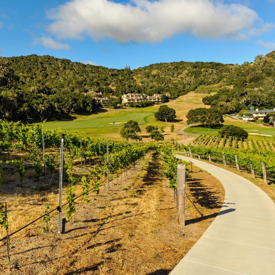 Nature Outdoors Wine-Tasting sky grass agriculture tree field hill rural area soil leaf mountain landscape valley autumn flower Vineyard lush