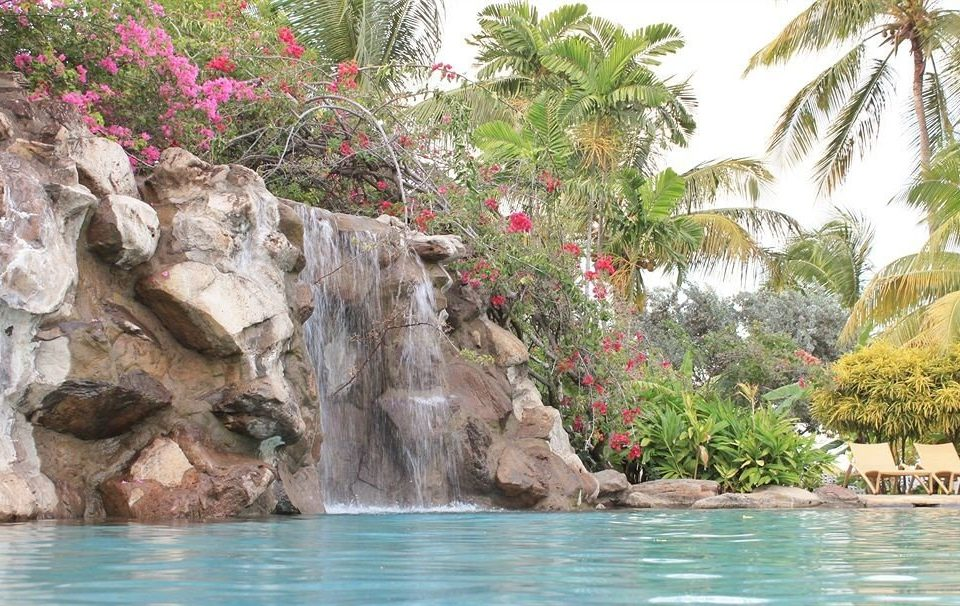 tree water rock Nature swimming pool water feature plant