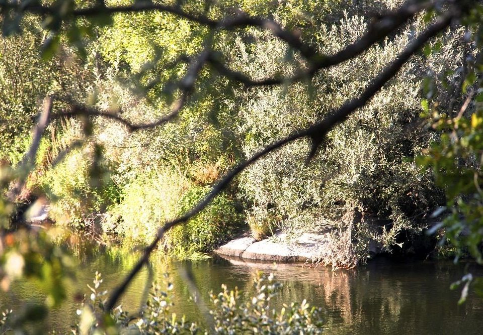 water tree habitat Nature flora fauna plant flower branch botany Wildlife woody plant River leaf woodland blossom pond autumn surrounded wooded root prop root