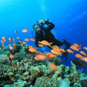 habitat divemaster coral reef marine biology natural environment coral reef fish reef biology Scuba Diving underwater diving Nature diving water sport sports coral underwater swimming ocean floor