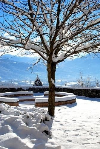 snow tree Winter Nature weather season plant freezing branch ice woody plant frost shore surrounded day