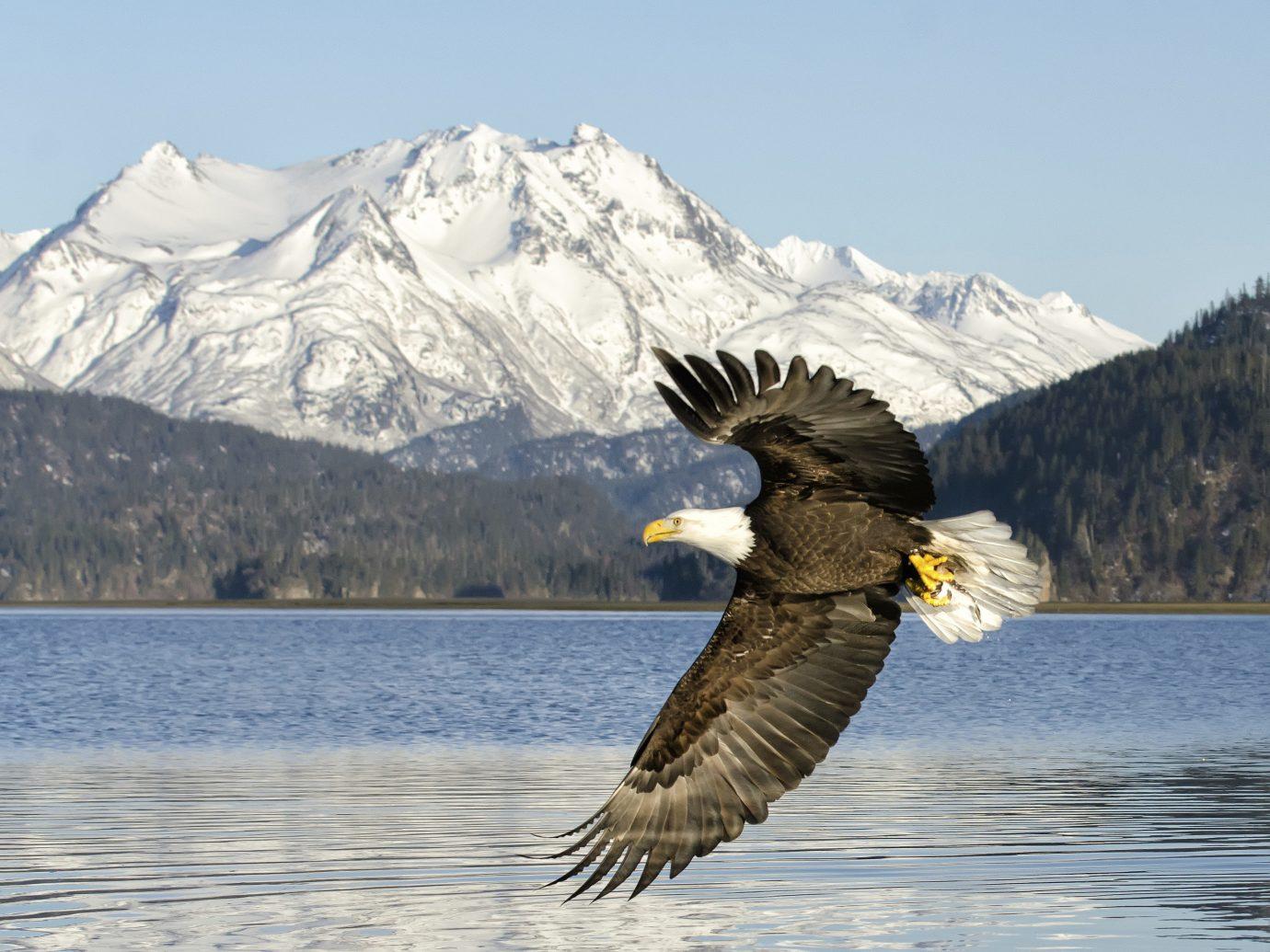 Trip Ideas sky outdoor snow animal Bird mountain vertebrate eagle bird of prey Winter bald eagle wing day