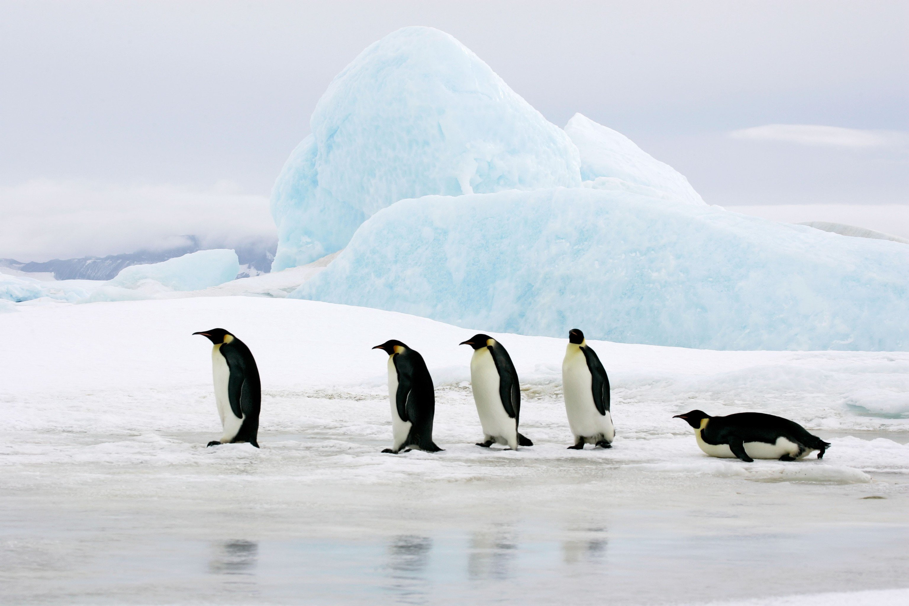Trip Ideas sky flightless bird Bird penguin outdoor vertebrate mountain arctic ice arctic ocean black Nature