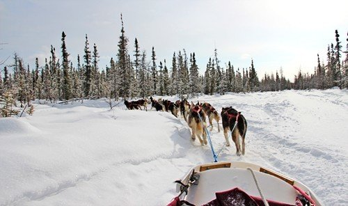 Outdoors + Adventure snow outdoor sky transport vehicle dog sled land vehicle sled Winter geological phenomenon mushing racing auto racing