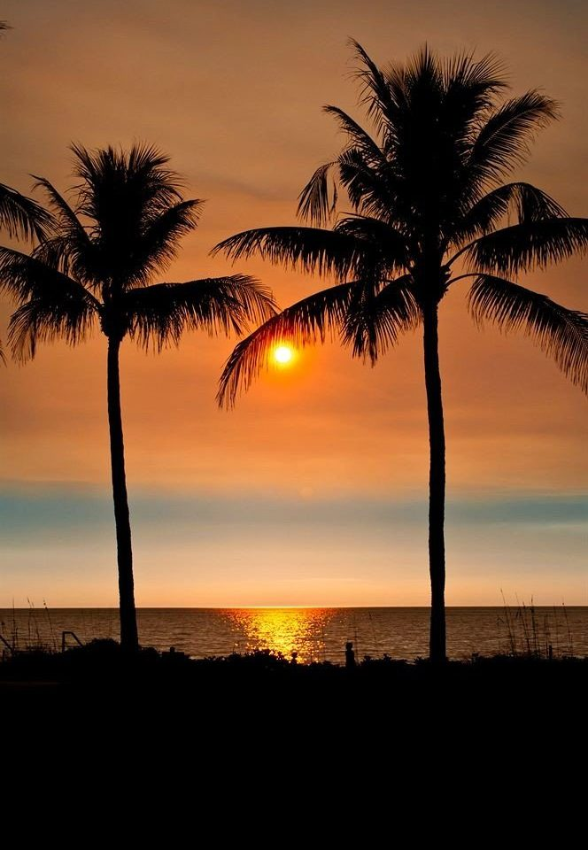 Ocean Romantic Scenic views Sunset Tropical Waterfront tree sky plant water palm Sun horizon sunrise palm family setting dawn dusk arecales morning savanna woody plant evening Sea sunlight light night distance shade