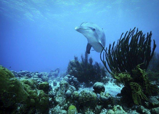 marine biology underwater coral reef biology reef Ocean Sea coral reef fish fish ocean floor