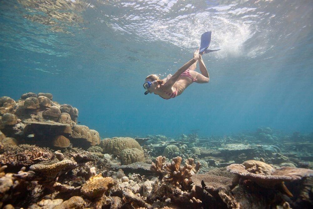 man water sport Sea Sport marine biology rock underwater Ocean biology sports diving outdoor recreation coral reef swimming reef snorkeling