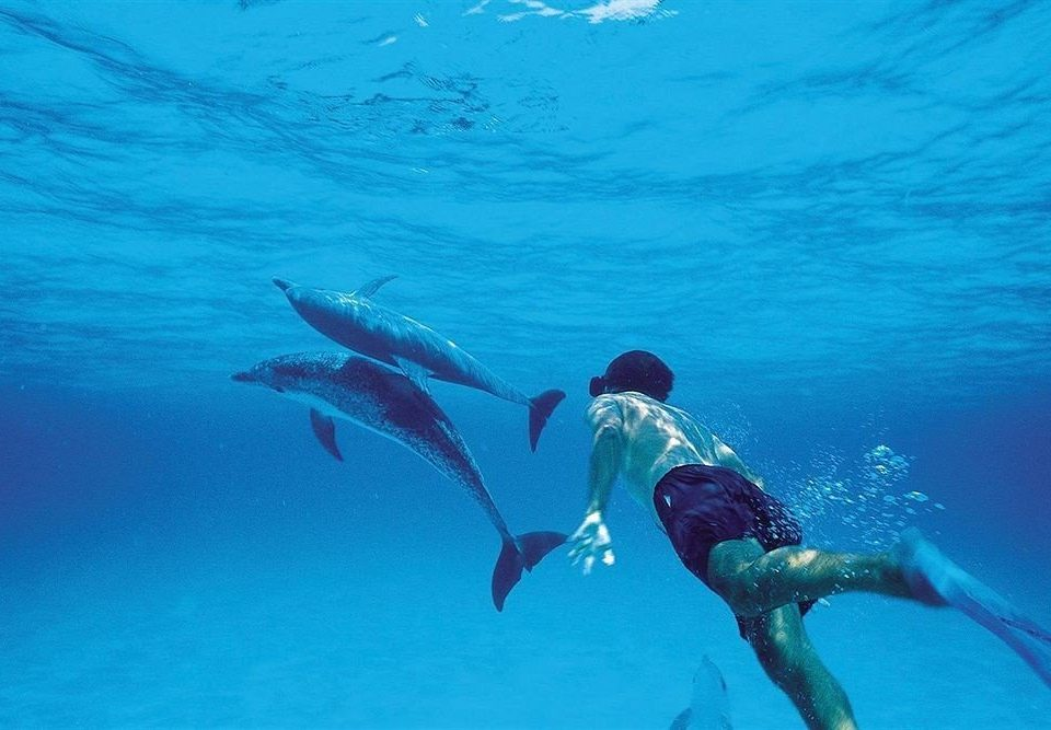 water marine biology Sport freediving sports underwater diving underwater Sea Ocean water sport outdoor recreation diving blue swimming