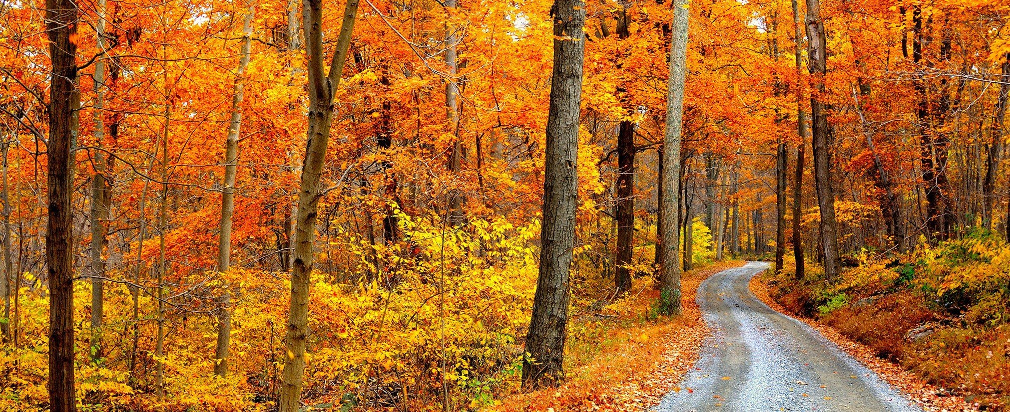 Trip Ideas tree grass habitat outdoor Forest natural environment autumn season ecosystem plant leaf wooded woodland temperate broadleaf and mixed forest park land plant wood deciduous poplar larch area lush