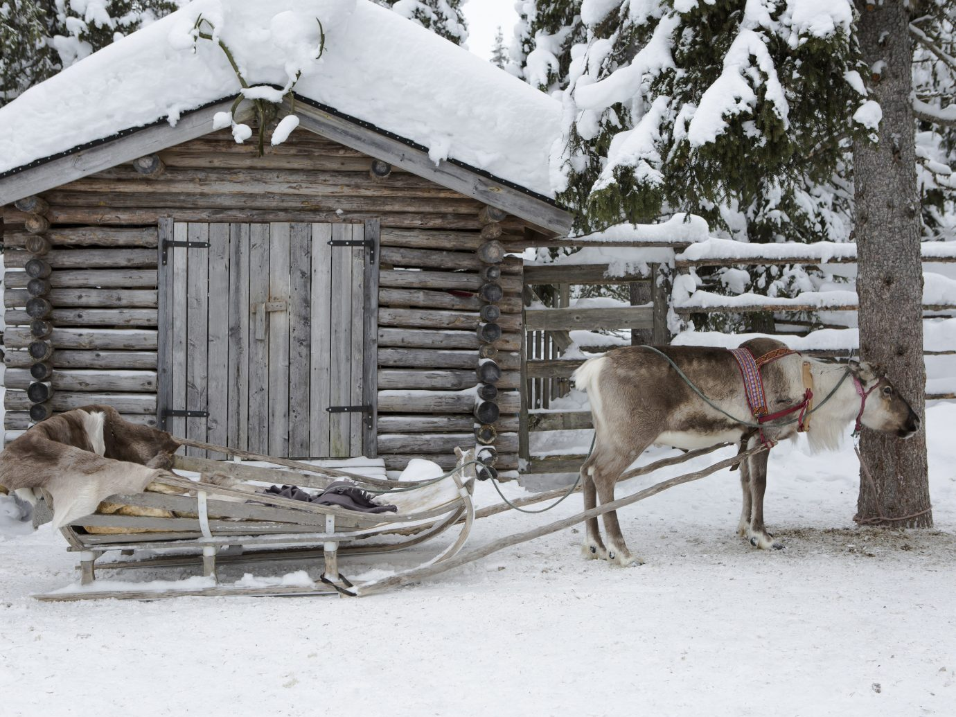 Adventure outdoor tree snow Winter reindeer log cabin house hut deer home wood sugar house freezing shed farm building