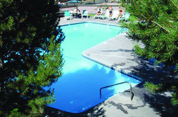 tree swimming pool reflecting pool pond surrounded