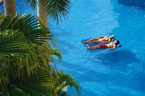 palm swimming pool tree plant leisure Pool caribbean arecales tropics Sea Water park Resort swimming