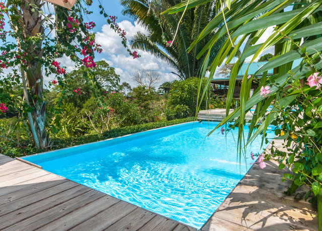 tree swimming pool Pool property leisure backyard blue Resort Villa plant colorful swimming