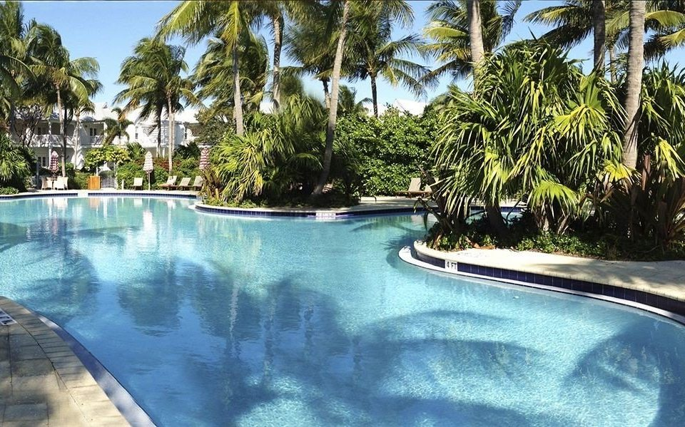 tree palm Resort swimming pool property Pool resort town Villa condominium plant surrounded
