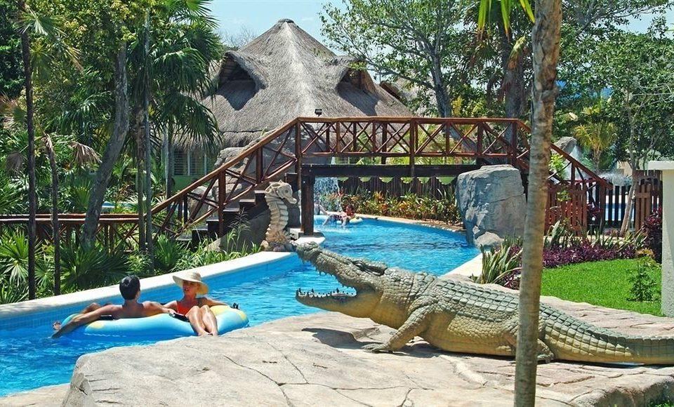 tree reptile animal leisure swimming pool Resort Pool Water park backyard Villa