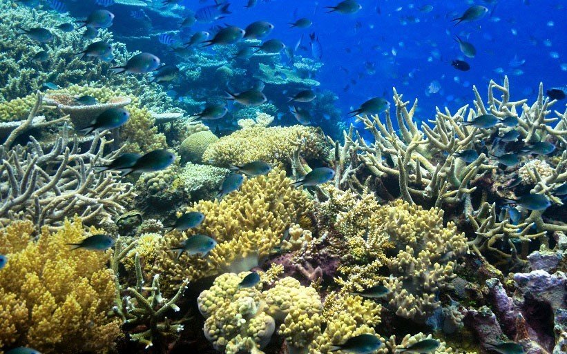 Beach coral reef habitat reef coral reef fish natural environment landform marine biology outdoor coral geographical feature Nature ecosystem stony coral biology organism underwater aquarium freshwater aquarium vegetable shoal Garden variety ocean floor