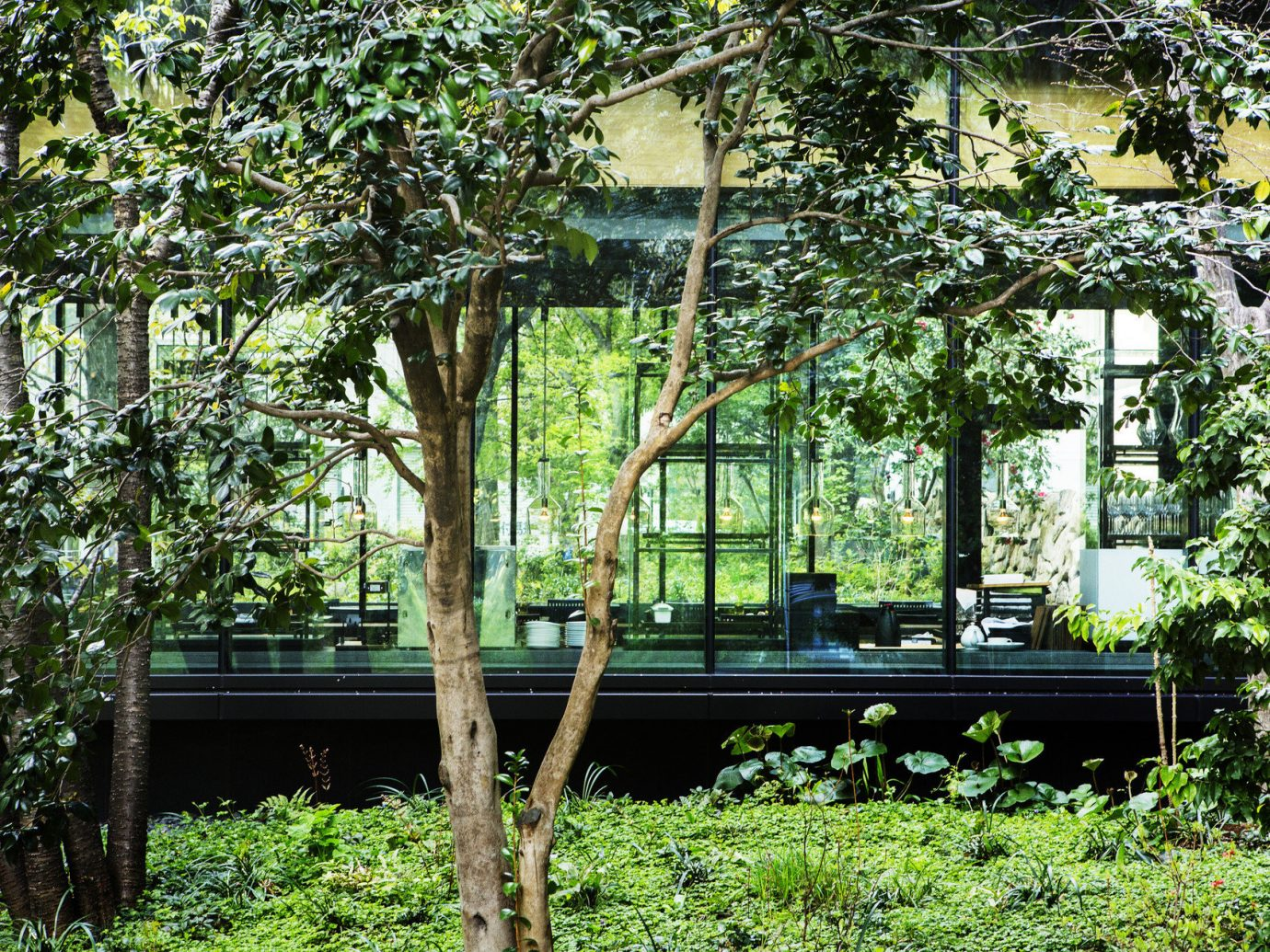 Hotels Japan Tokyo tree outdoor park flora botany Garden plant house flower woody plant woodland estate backyard Jungle yard cottage botanical garden outdoor structure area wooded