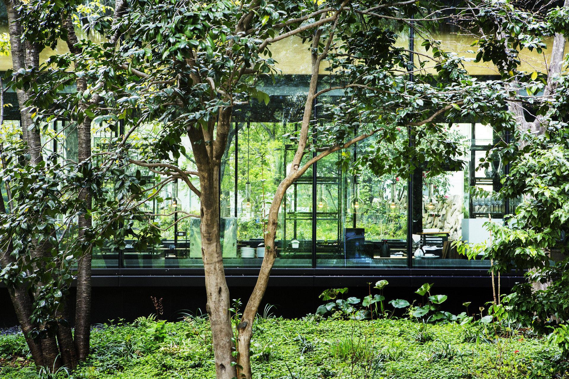 Hotels Japan Tokyo tree outdoor park flora botany Garden plant house flower woody plant woodland estate backyard Jungle yard cottage botanical garden outdoor structure area wooded