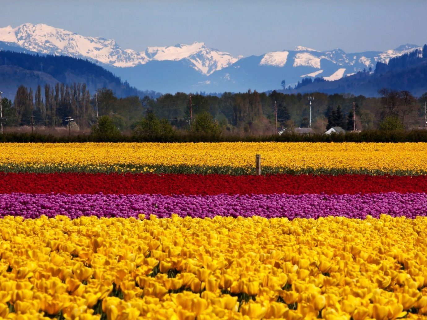 Travel Tips mountain outdoor sky flower plant field tulip land plant flowering plant background rapeseed wildflower meadow
