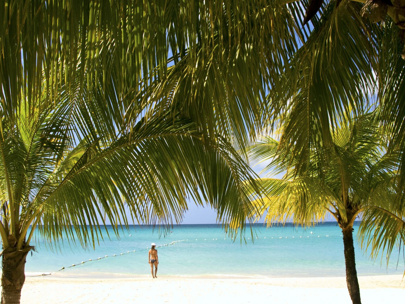 Trip Ideas tree outdoor plant water Beach palm body of water palm family arecales Ocean woody plant Sea tropics Coast sand sunlight shore sandy