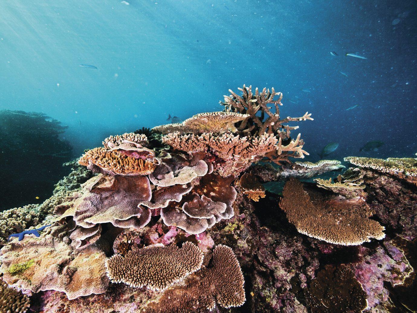 Trip Ideas reef coral reef marine biology rock underwater natural environment biology Sea coral Ocean coral reef fish aquarium invertebrate