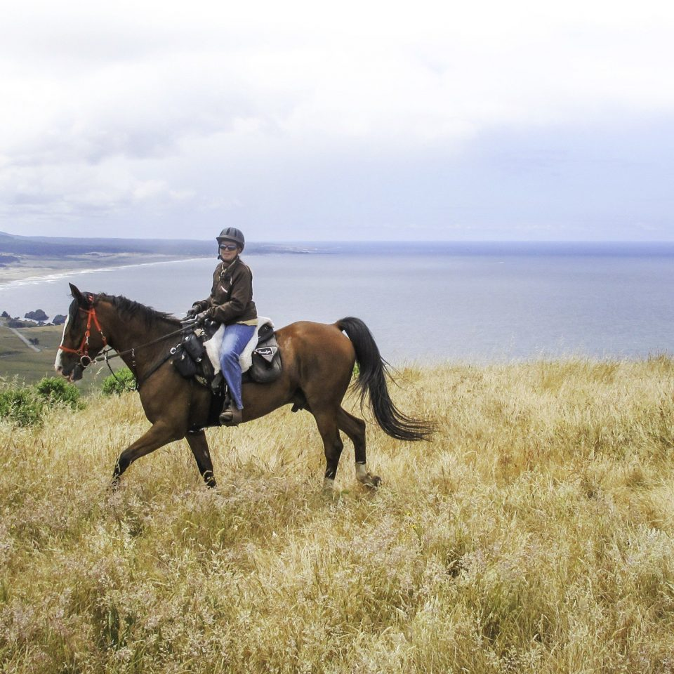 grass sky horse field brown natural environment grassland ecosystem pasture trail riding steppe equestrianism mustang horse prairie horse like mammal mammal landscape animal sports grassy Ranch open