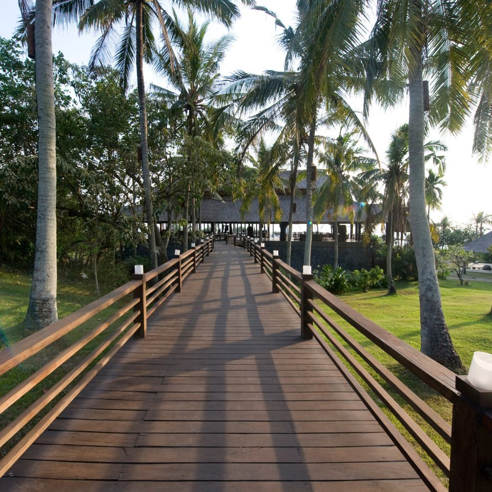 tree grass bench park walkway wooden boardwalk arecales Resort palm empty lined