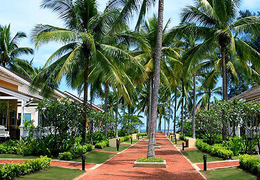 tree palm sky plant palm family Resort botany arecales walkway woody plant tropics caribbean borassus flabellifer flower lined