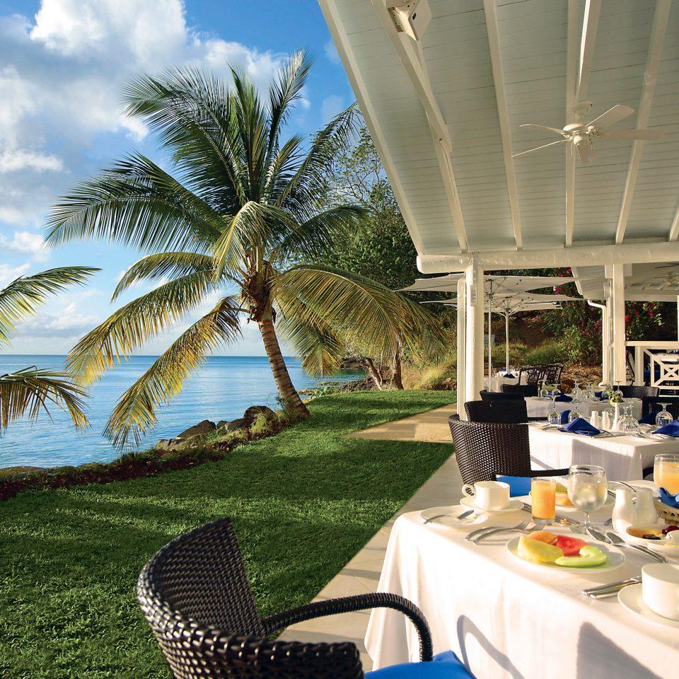 tree grass Resort palm arecales caribbean plant restaurant