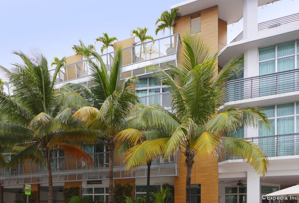 property tree condominium Resort palm family arecales plant palm