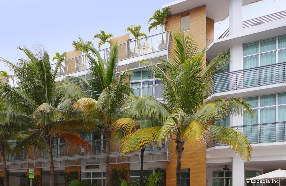 property tree condominium Resort palm family arecales plant palm