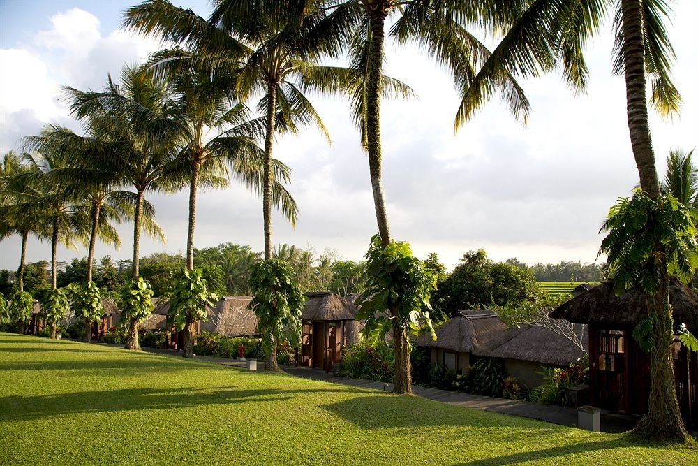 tree grass sky palm plant arecales Resort palm family home plantation flower tropics shade