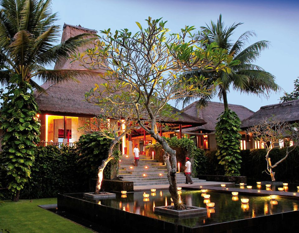tree sky Resort arecales home palm flower plant lined