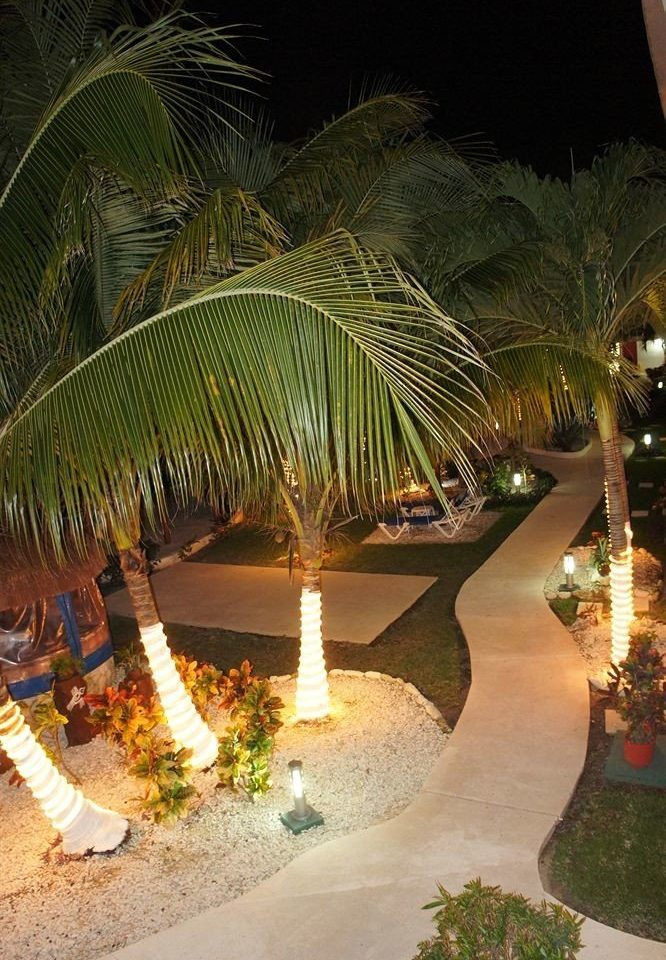tree plant night arecales Resort palm family palm tropics flower restaurant