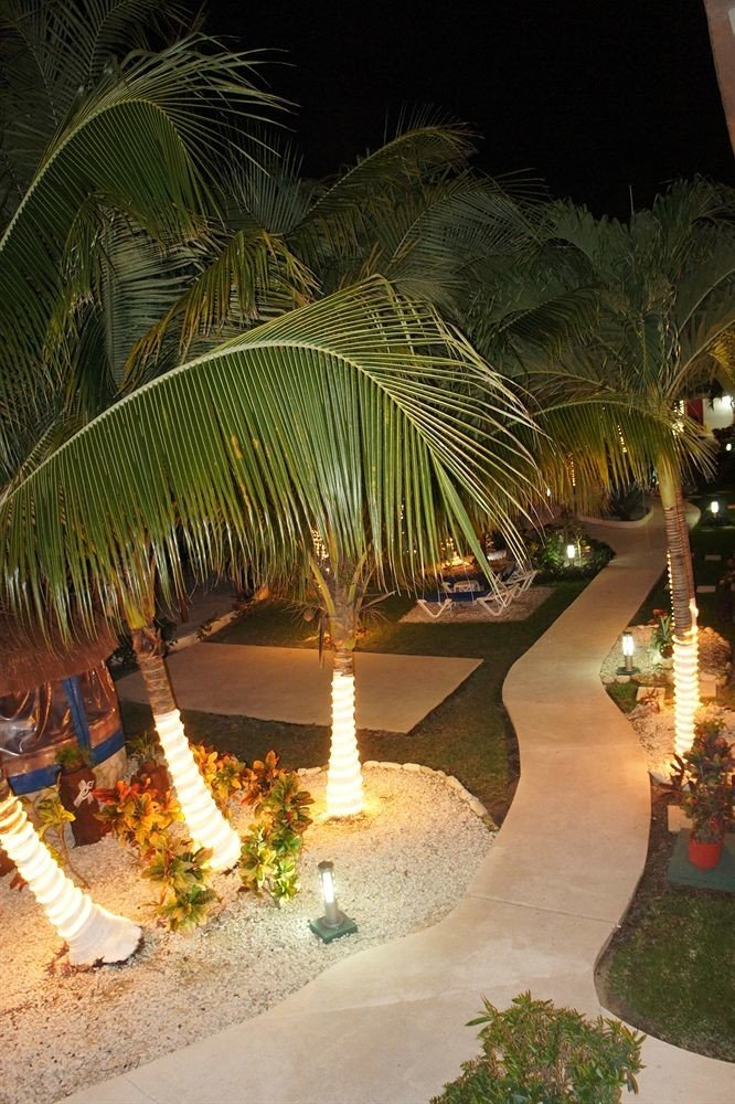 tree plant night arecales Resort palm family palm tropics flower restaurant