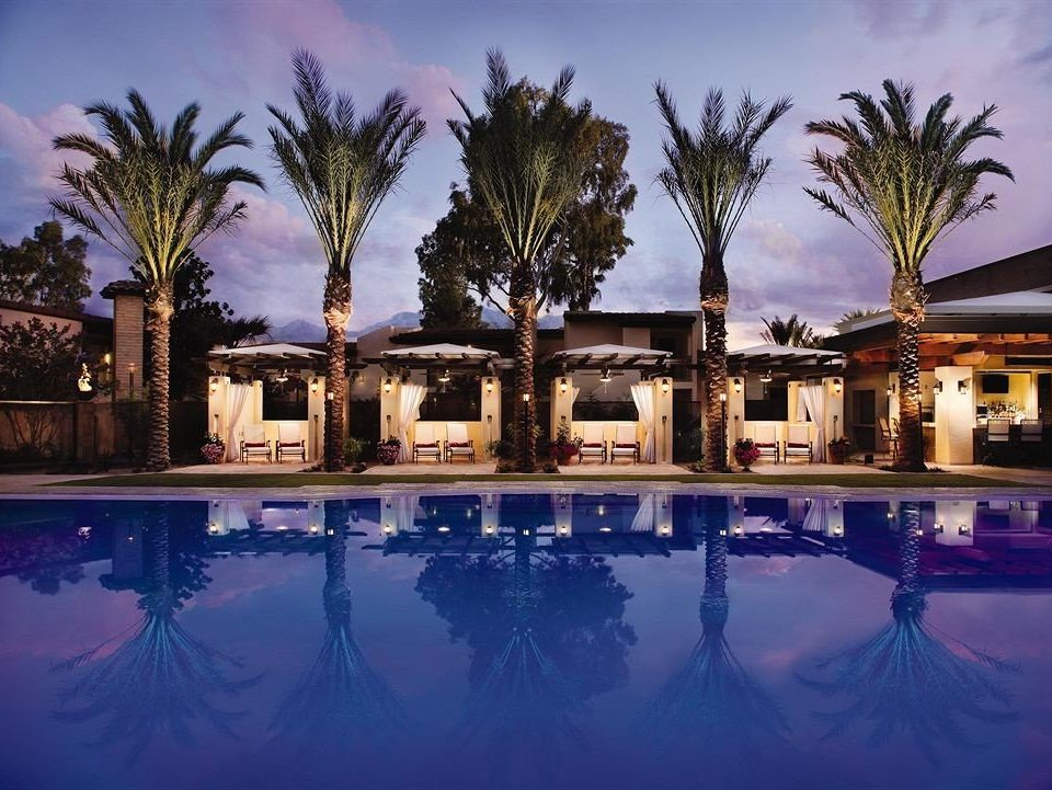 tree palm swimming pool Resort palace plant arecales mansion lined surrounded